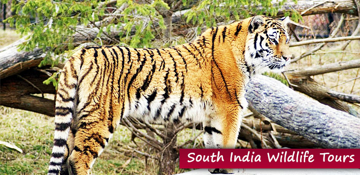 South India Wildlife Packages